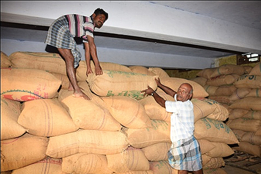 FARMERS ARRANGING PADDY BAGS IN DMC